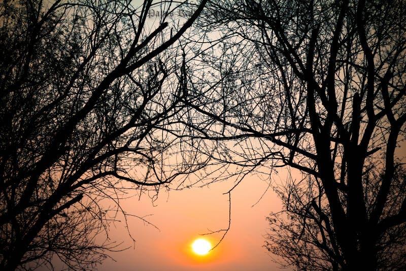 Sunny royalty free stock photos