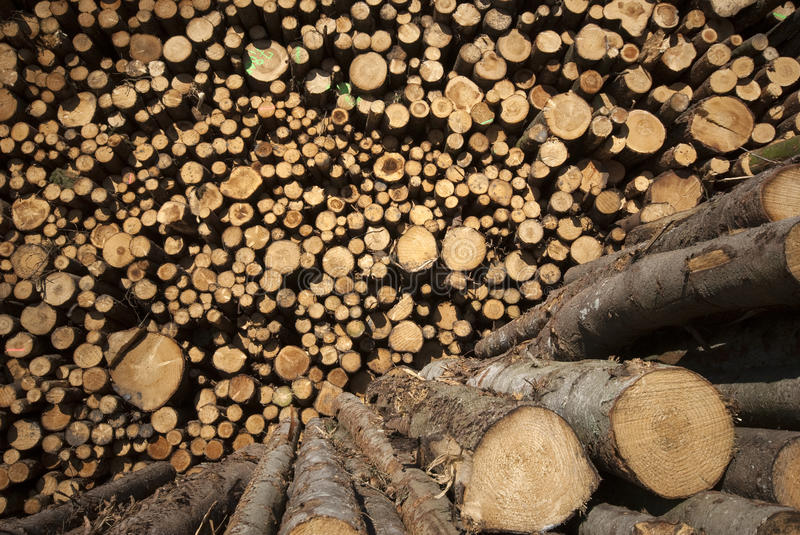 Download Sunny timber stock image. Image of horizontal, industry - 24492413