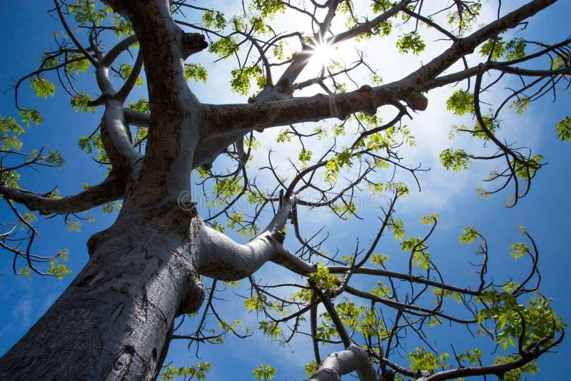 Sunny Tree imagen de archivo libre de regalías