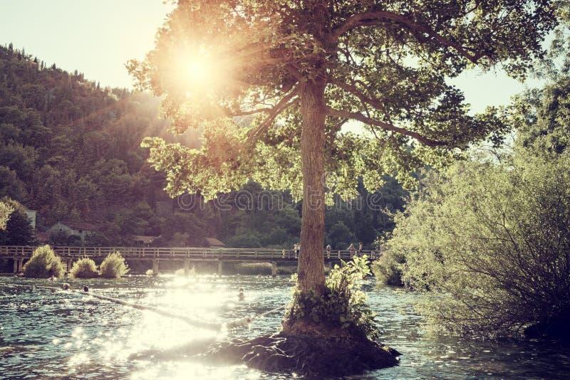 Sunny tree on the river Krka in the Krka National Park, nature landscape, Croatia royalty free stock photography