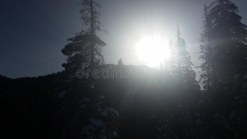 Sunny trees stock photo