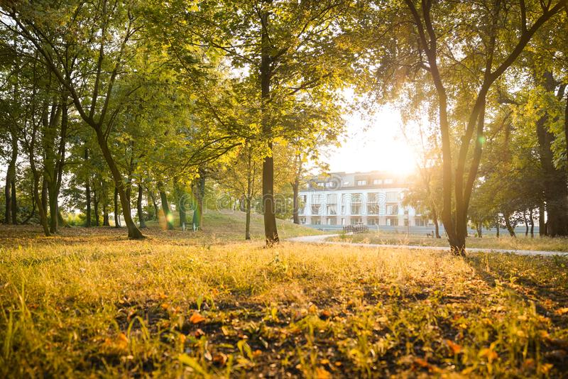 Sunny warm evening in a park royalty free stock photo