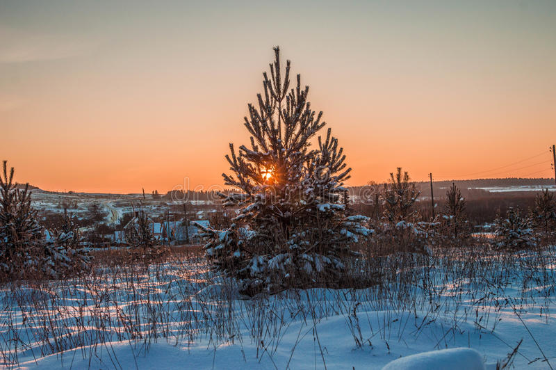 Sunny weather . Winter forest landscape, snow. A Winter forest landscape, snow sunny weather royalty free stock photo