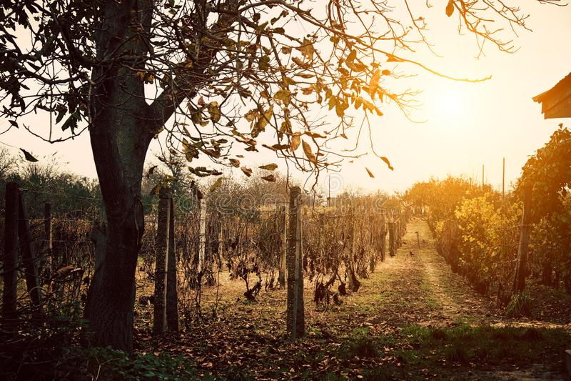 Sunny Wineyard-scène royalty-vrije stock afbeeldingen