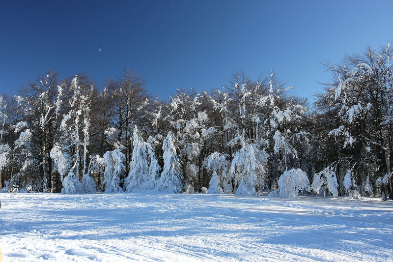 Sunny winter day in forest stock image