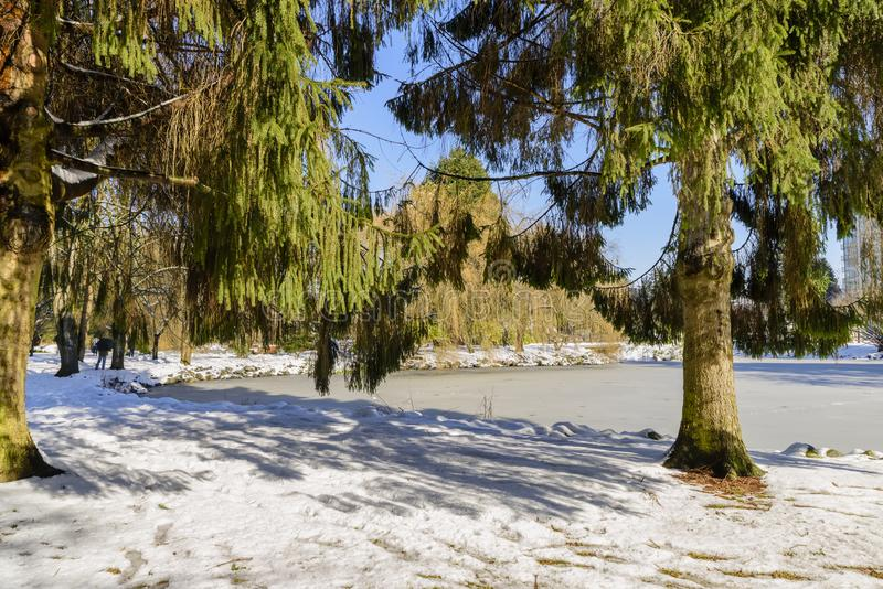 Sunny winter day in a snow-covered city park with a lake of bound ice. Green trees, people and a building, a blue sky not in the background royalty free stock image