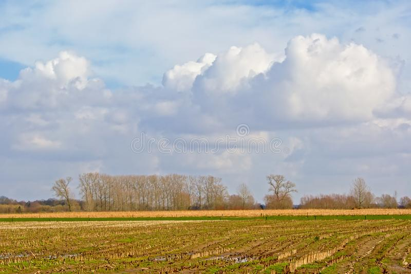 Sunny winter farmscape in the Flemish countryside royalty free stock photography