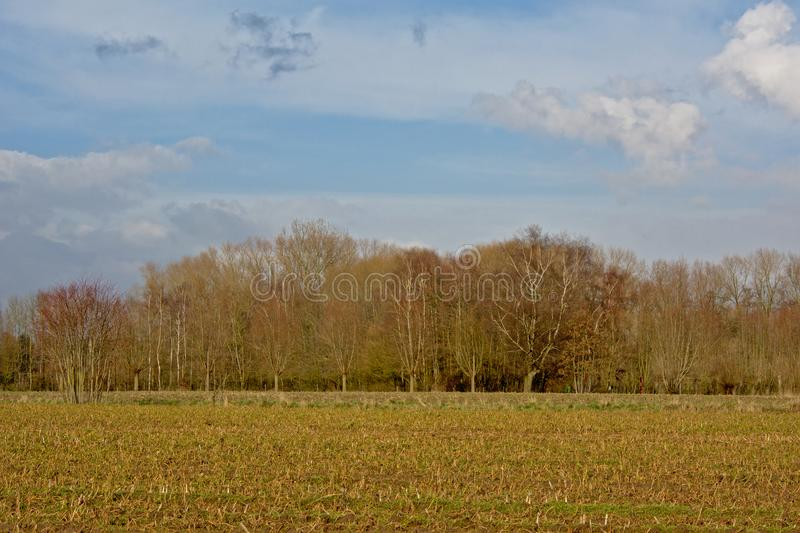 Sunny winter landscape in the Flemish countryside royalty free stock image