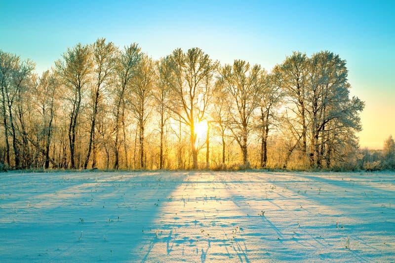 Sunny winter landscape with sunrise stock images