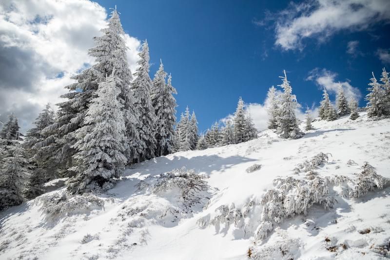 Sunny Winter landscape with trees covered in snow, a mountain ridge, and blue skies, on a sunny February day. While hiking in Bucegi mountains part of stock photo
