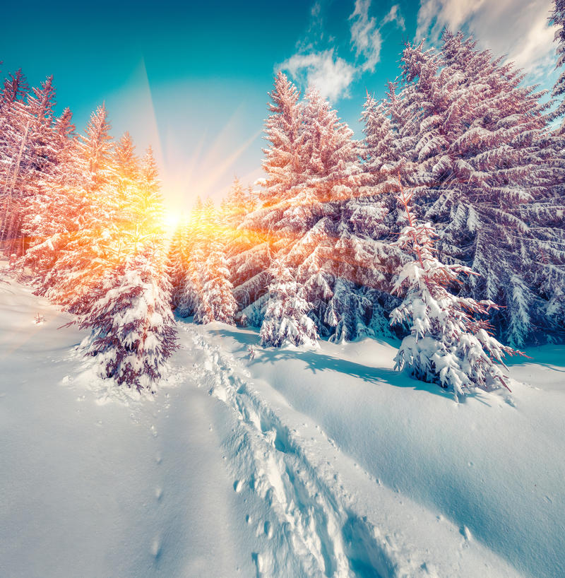 Sunny winter sunrise in the mountain forest. Instagram toning royalty free stock image