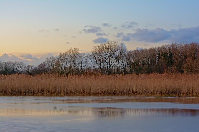 Sunny winter wetland landscape with reed and bare trees reflecting in the water with a clolorful evening sky stock photos