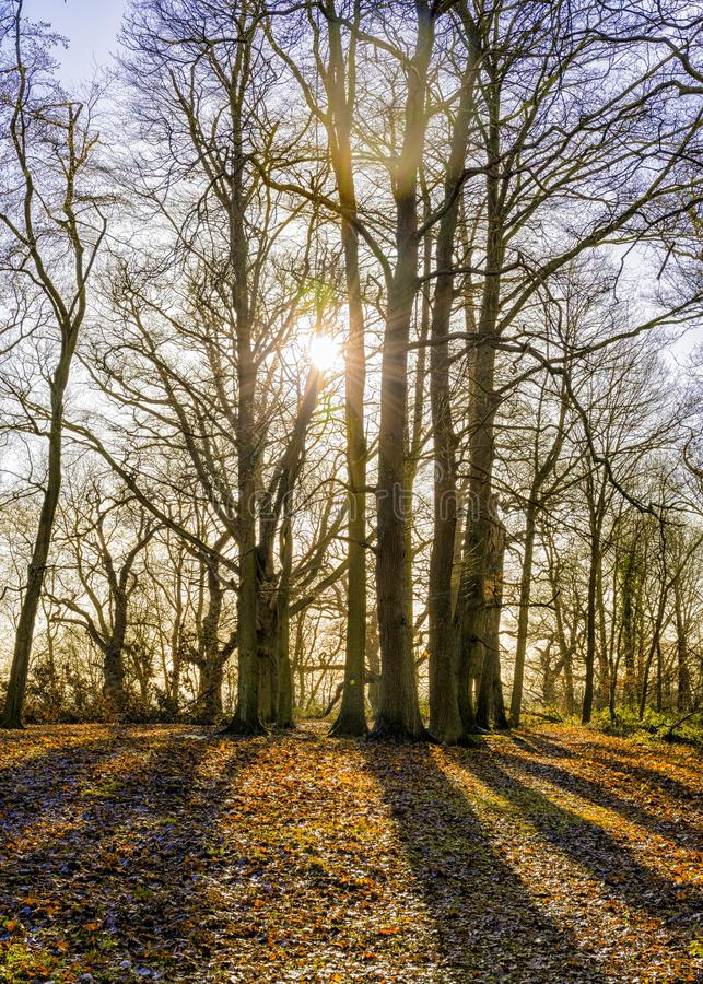 Sunny Winter Woodland Morning em Worcestershire fotografia de stock