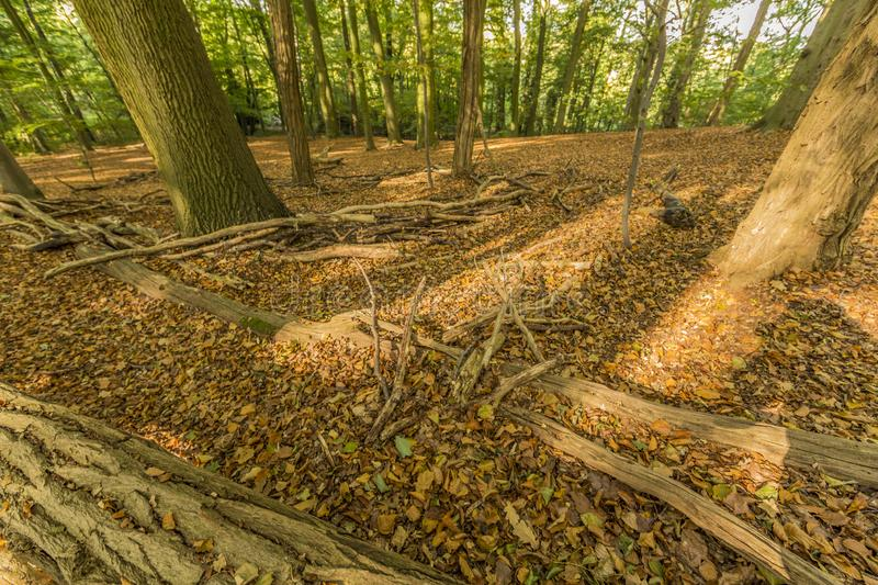 Sunny and wonderful autumn day in the forest. In Spaubeek in South Limburg in the Netherlands Holland royalty free stock photo
