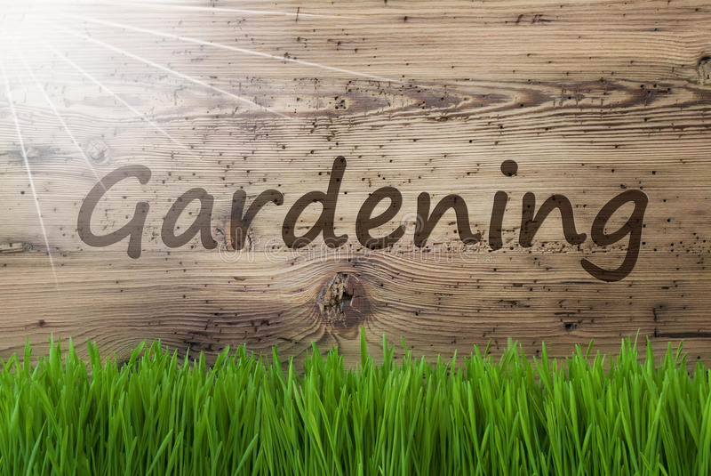 Sunny Wooden Background, Gras, Text Gardening. English Text Gardening. Spring Season Greeting Card. Sunny Aged Wooden Background With Gras stock image