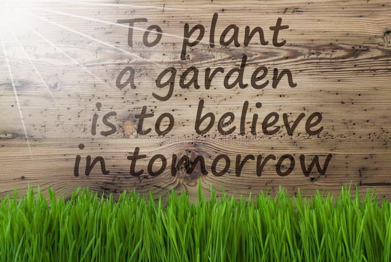 Sunny Wooden Background, Gras, Zitat-Betriebsgarten glauben morgen stockbilder