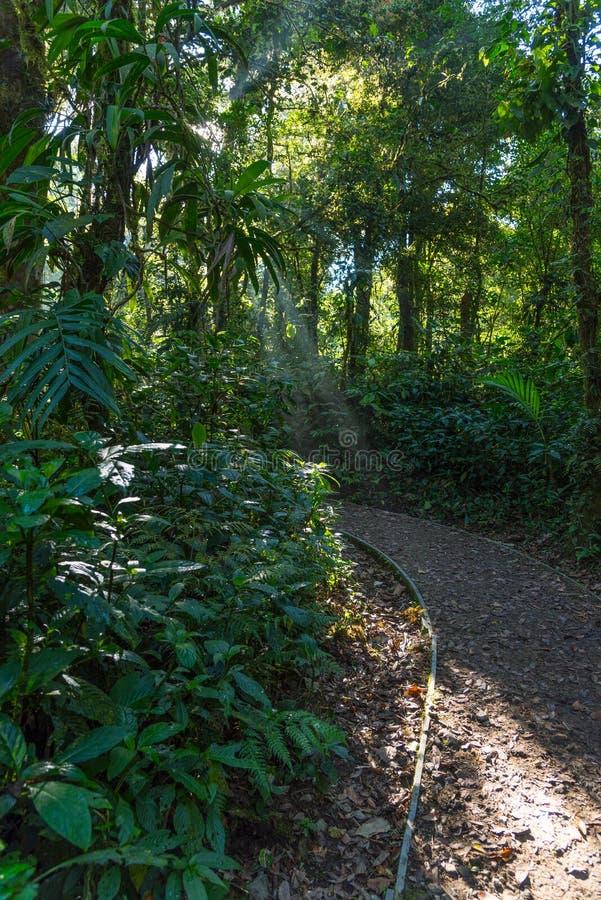 Sunray через деревья Путь в лесе в Коста-Рика стоковые фото