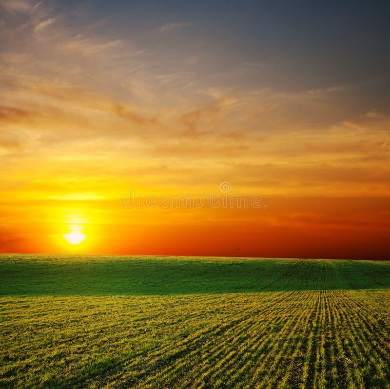 Sunrays über grünem Feld stockfotografie