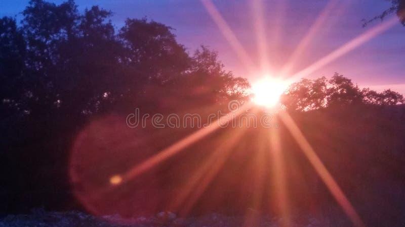 Sunrays в утре стоковые изображения rf