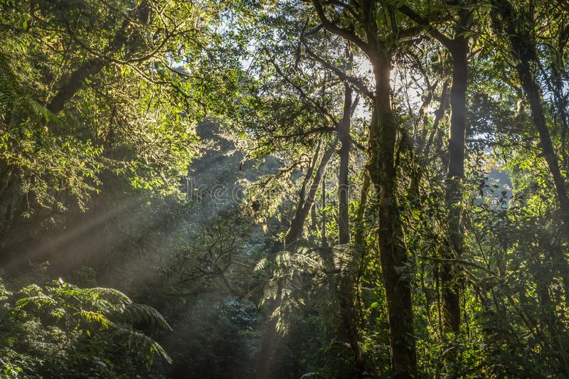 Sunrays breaking through the trees in the jungle. In Costa Rica`s Cloud Forest Reserve stock photos