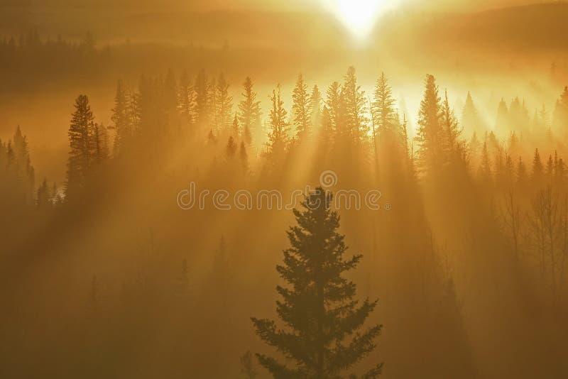 Sunrays e floresta imagens de stock royalty free