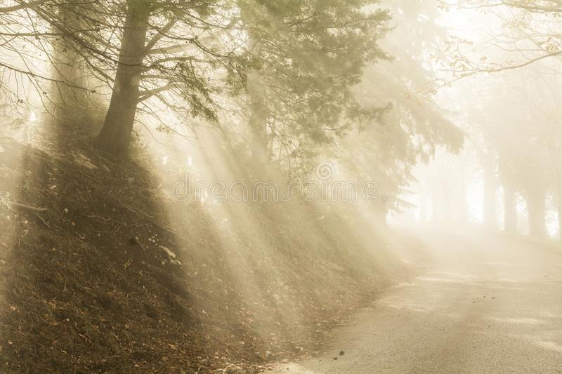 Sunrays filter through the fog and the trees on a country road stock images