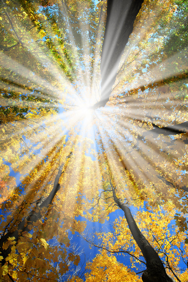 Free Sunrays In The Forest Stock Photography - 3581042