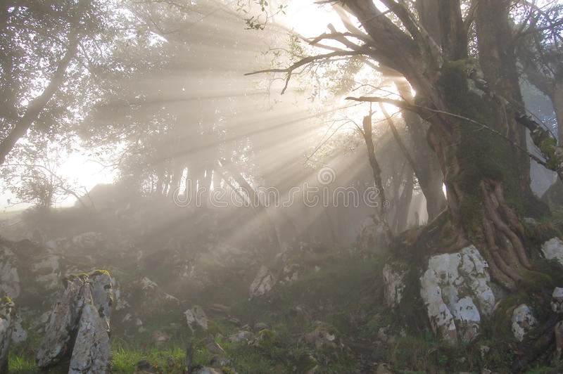 Sunrays pasing through the branches of a tree stock images