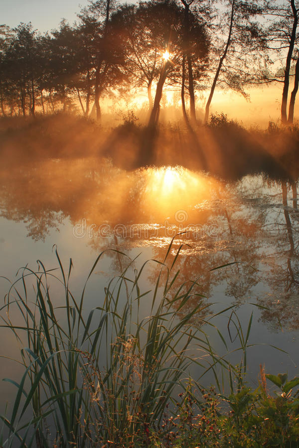 The sunrays pass through the fog royalty free stock images