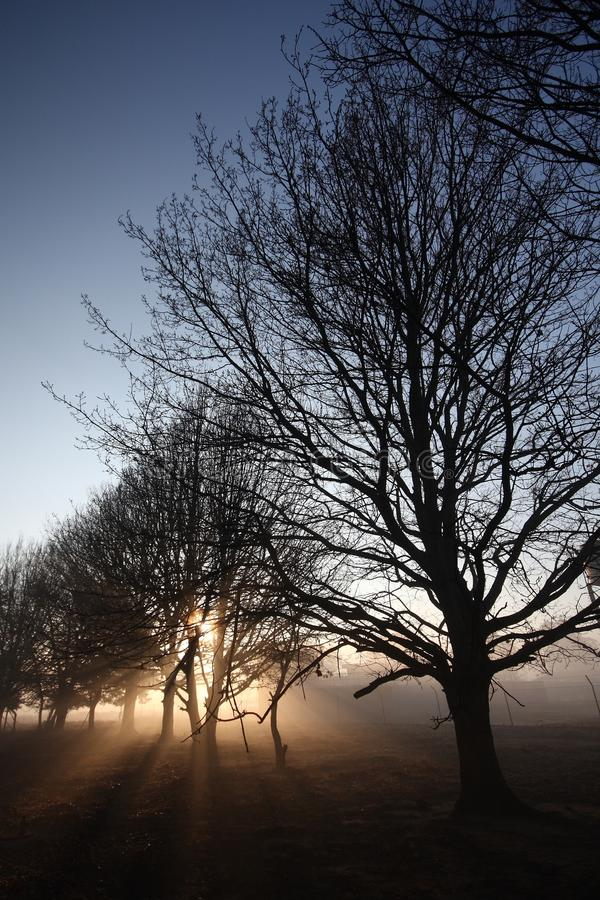 Sunrays through tree branches stock images