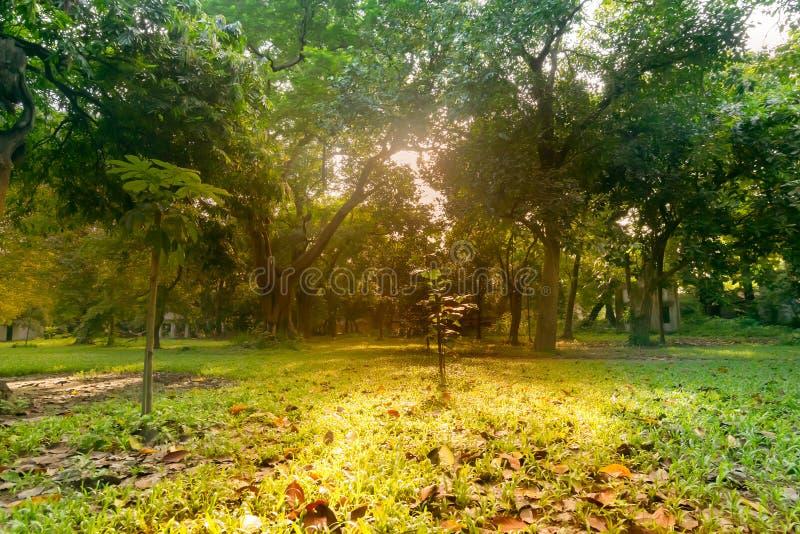 Sunrays through trees in morning, Kolkata royalty free stock photography