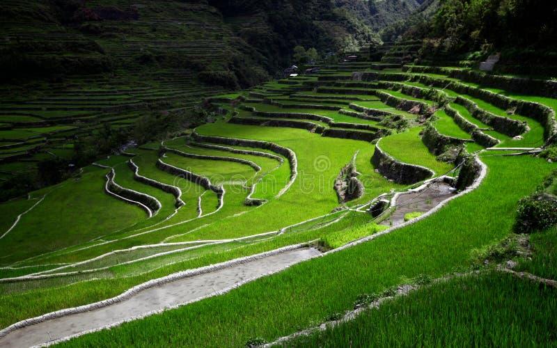 sunrays zaświecający ryżowi tarasy obraz stock