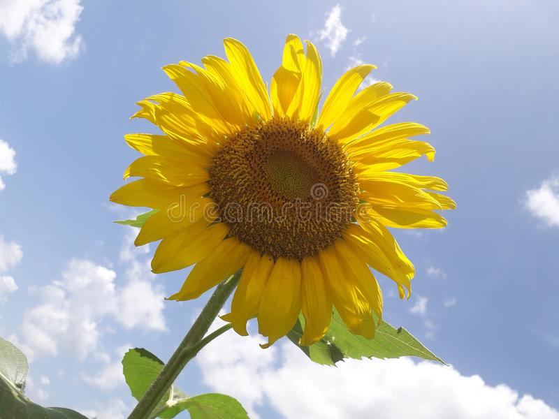 Sunraze stock photo