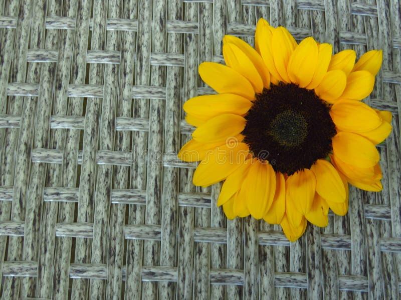 Sunrich橙黄夏天高向日葵顶视图在藤条背景纹理的 库存照片