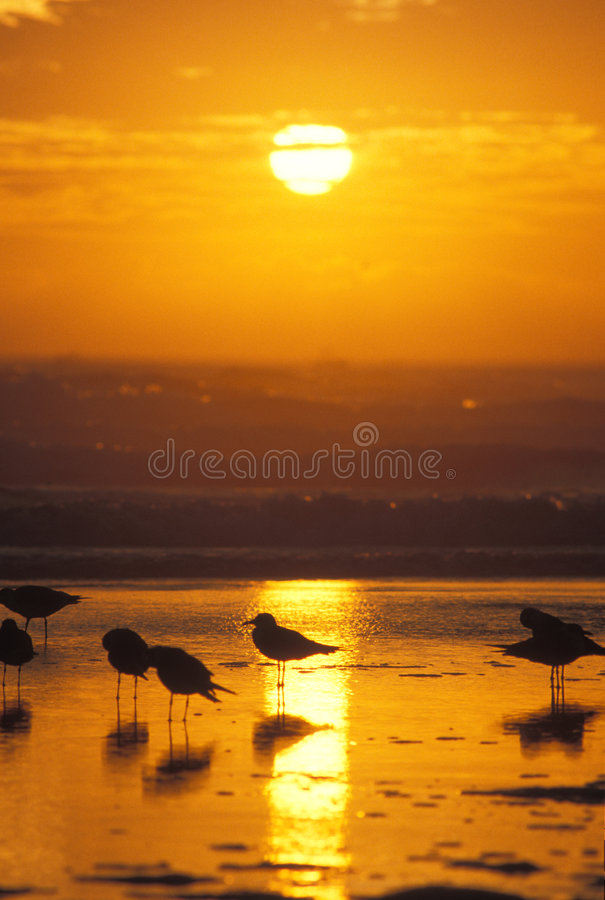 Download Sunrise stock photo. Image of reflection, florida, dawn - 241476