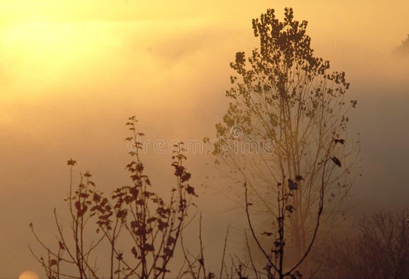 Download Sunrise stock photo. Image of picture, tree, antonio, immagini - 245418