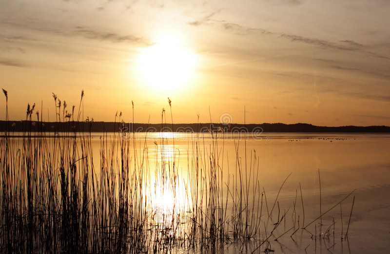 Download Sunrise stock photo. Image of reed, water, cloud, reflect - 4838388
