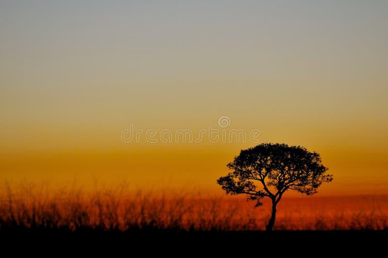 Sunrise. A sunrise and a tree royalty free stock image