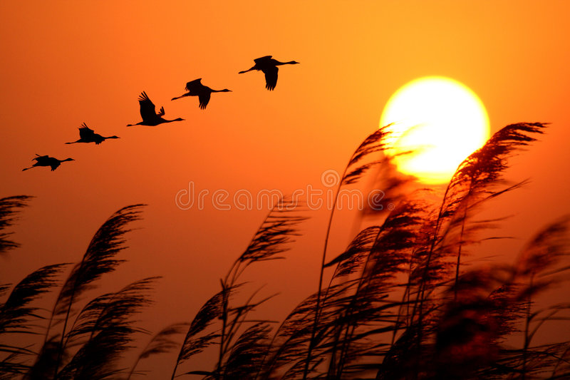 Sunrise. This is beautiful sunrise in poyang lake stock photos