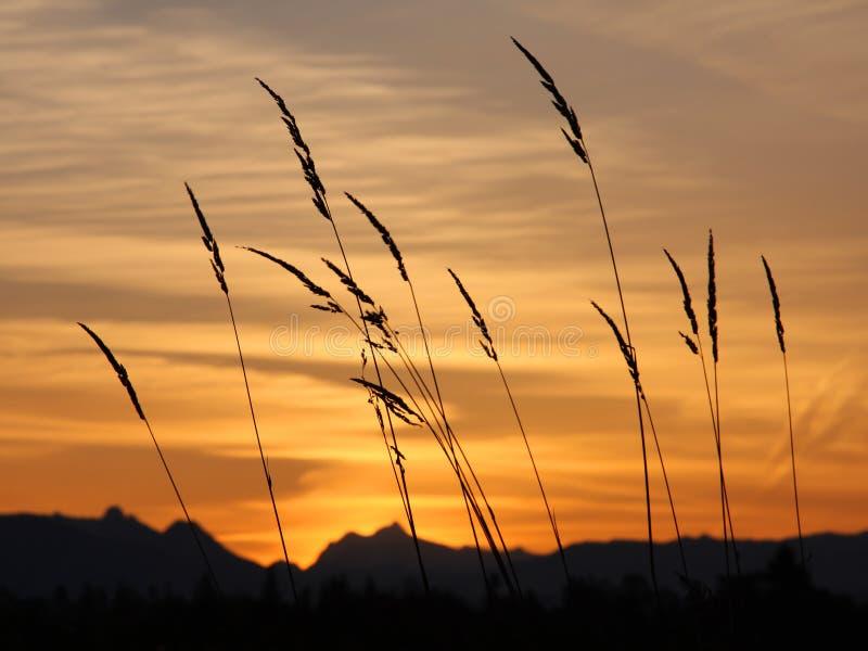 Download Sunrise Royalty Free Stock Photo - Image: 7254595