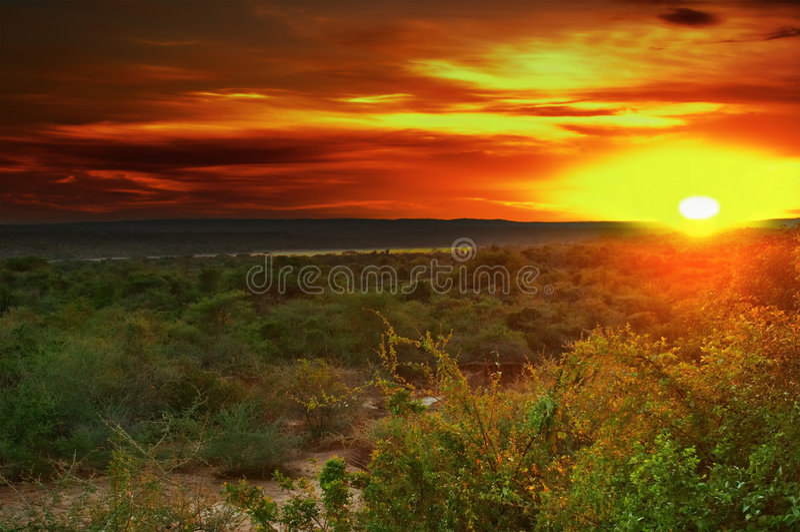 Sunrise in african savanna royalty free stock photos