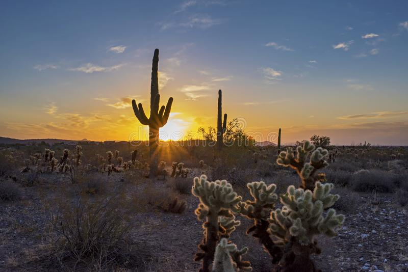 Sunrise in Arizona royalty free stock image