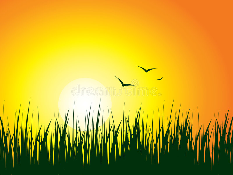 Download Sunrise background stock vector. Image of yellow, wallpaper - 4337112