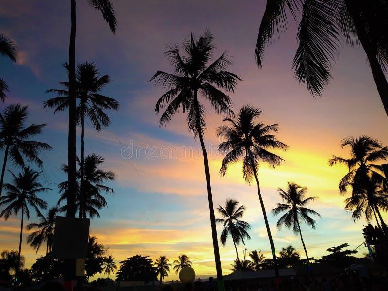 Sunrise on the beach with a color sky and beautiful coconut tree. Porto Seguro, Salvador, Bahia, Brazil royalty free stock image