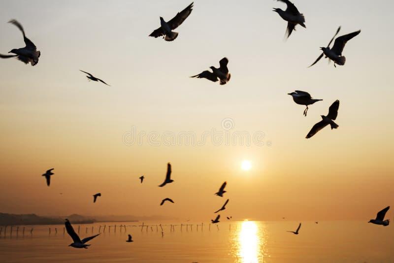Sunrise beautiful seagull play stock image
