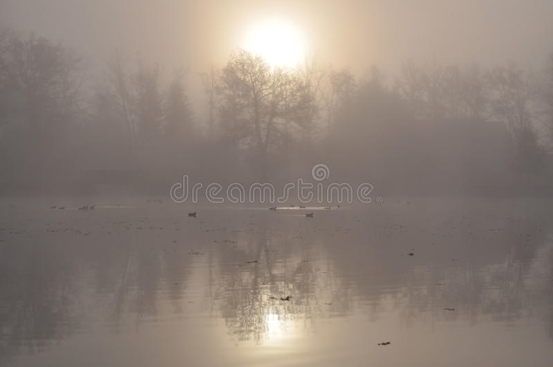Sunrise behind fog stock photo