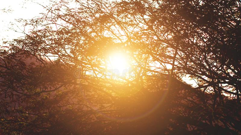 Sunrise Behind Silhouette of Tree royalty free stock photo