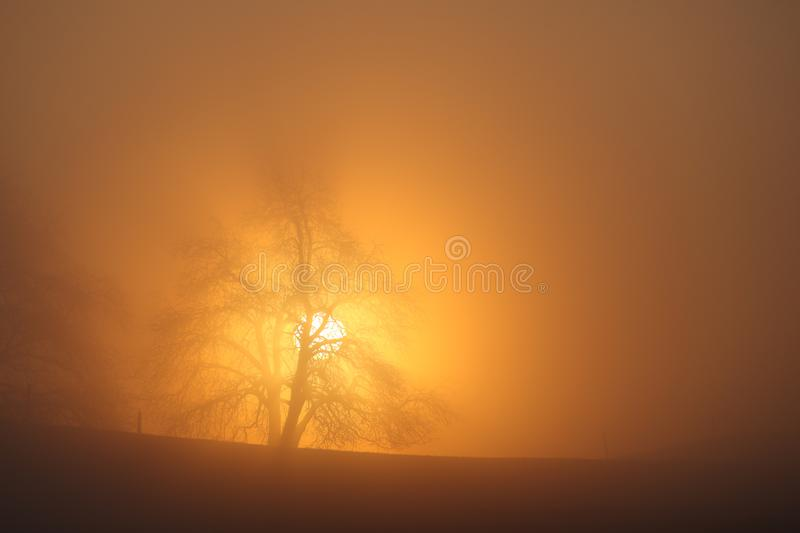 Sunrise behind a solitaire tree royalty free stock photography