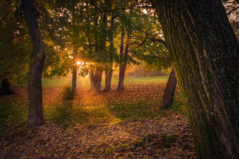 Sunrise behind the trees in the autumn in park with light streak royalty free stock image