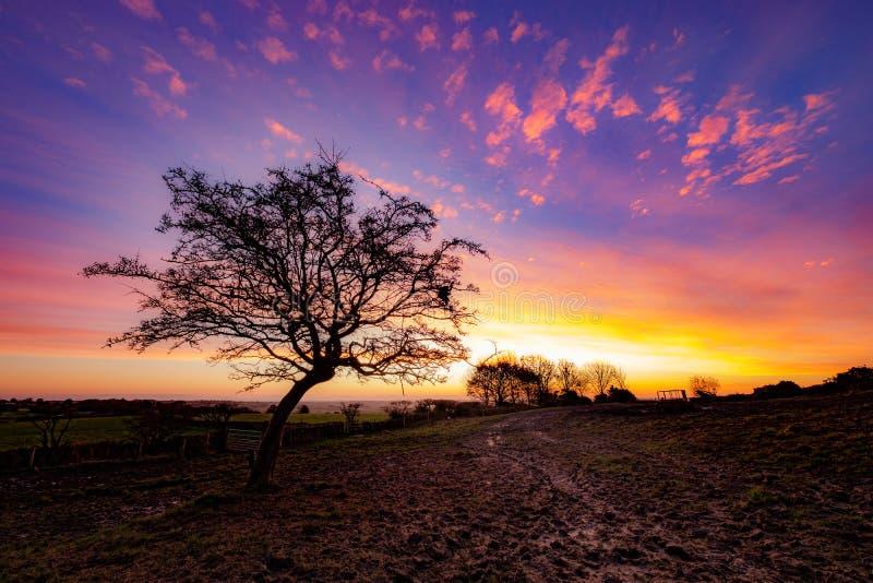 Sunrise behing a hawthorn tree royalty free stock image